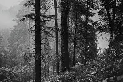 Photograph - Foggy Hike by Unsplash