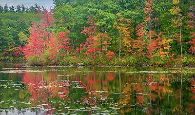 Photograph - Foliage Beside The Pond by Jane Luxton