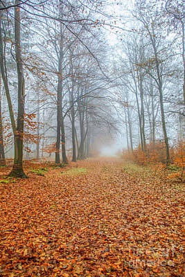 Abstract Male Faces - Footpath in fall forest by Patricia Hofmeester