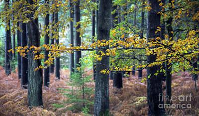 Fantasy Tree Mixed Media - Forest Branch by Svetlana Sewell