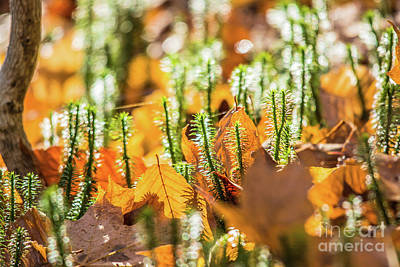 Photograph - Forest Floor by Cheryl Baxter