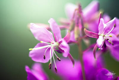 Photograph - Forest Flower by Adnan Bhatti