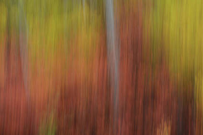 Photograph - Forest Illusions- Autumn Dance by Whispering Peaks Photography