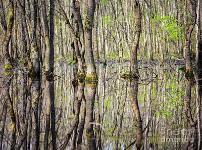 Mud Season Photograph - Forest In The Swamp by Catalin Petolea