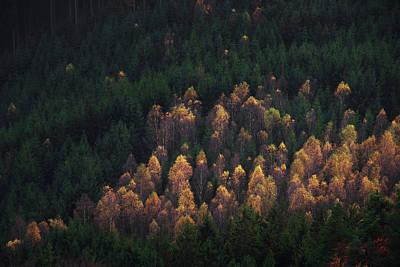 Photograph - Forest Landscape Of Bohemian Switzerland National Park. Detail Of Trees, Pravcicka Gate, Czech Republic by Marek Kijevsky
