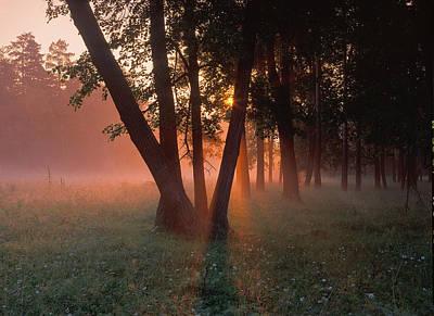 Photograph - Forest Light by Vladimir Kholostykh