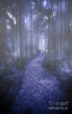 Forest Of Darkness Art Print by Jorgo Photography - Wall Art Gallery