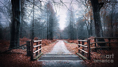Forest Path Art Print by Svetlana Sewell