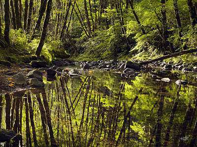 Forest Reflections Art Print by Leland D Howard
