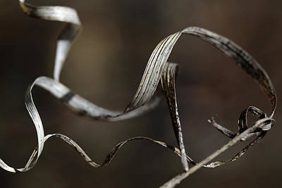 Photograph - Forest Ribbon 5 by Mary Bedy