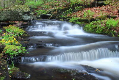 Photograph - Forest Stream And Marsh Marigolds by John Burk