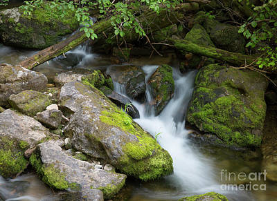 Photograph - Forest Stream by Idaho Scenic Images Linda Lantzy