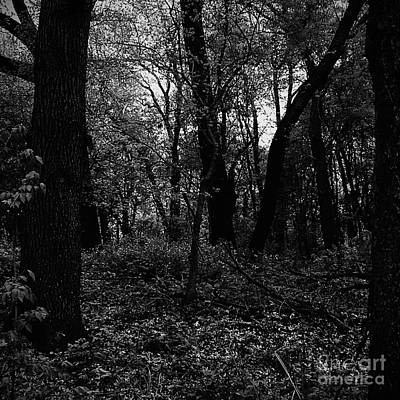 Frank J Casella Royalty-Free and Rights-Managed Images - Forest Through The Trees by Frank J Casella