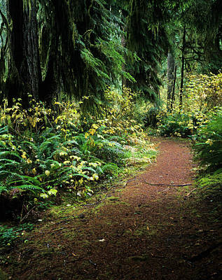 Photograph - Forest Trail by Robert Potts