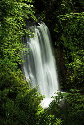 Photograph - Forest Waterfall by Chris McKenna
