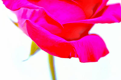 Flower Blooms Photograph - Forever In Love by Krissy Katsimbras