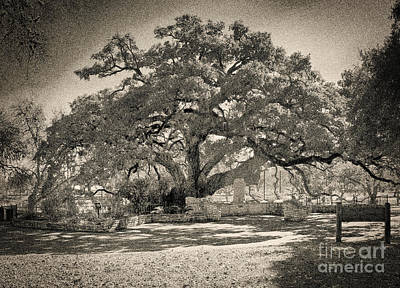 Founders Tree Photograph - Founder's Oak by Gary Richards