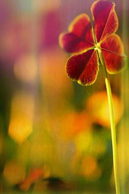 4 Leaf Clover Photograph - Four-leaf Clover by Bonnie Bruno