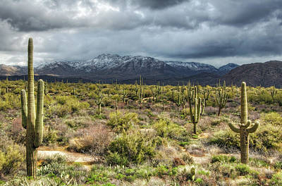 Photograph - Four Peaks Wilderness Snow  by Saija Lehtonen