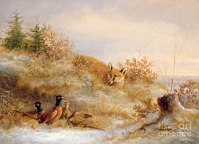 Oil Landscape Painting - Fox And Pheasants In Winter by Anonymous