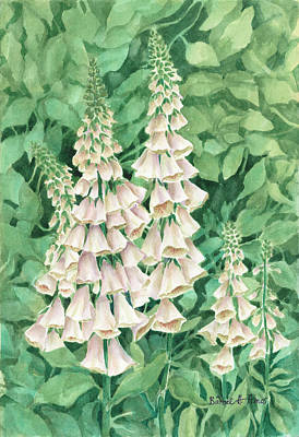 Painting - Foxglove by Barbel Amos