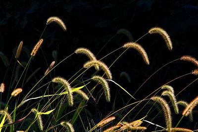Photograph - Foxtails by Kathryn Meyer