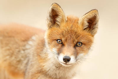 Fox Kit Photograph - Foxy Face by Roeselien Raimond