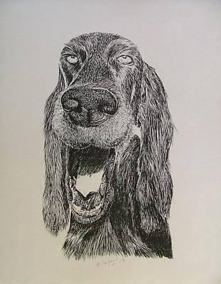 Cocker Spaniel Drawing - Fred by Dan Hausel
