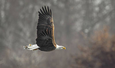 Photograph - Freedom  by Kelly Marquardt