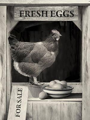 Photograph - Fresh Eggs by Robin-Lee Vieira