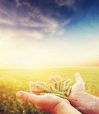 Photograph - Fresh Green Cereal Grain In Farmer's Hands by Michal Bednarek