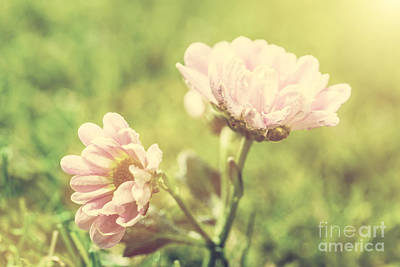 Plant Photograph - Fresh Spring Flower In Sun Light by Michal Bednarek