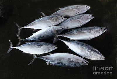 Photograph - Fresh Tuna For Sale At The Market by Yali Shi