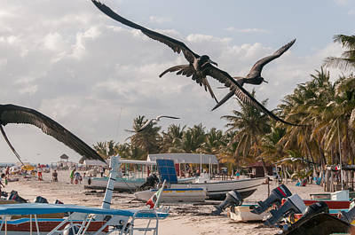 Digital Art - Frigates Fighting For Food At Isla Mujeres by Carol Ailles