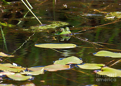Photograph - Frog by Mim White