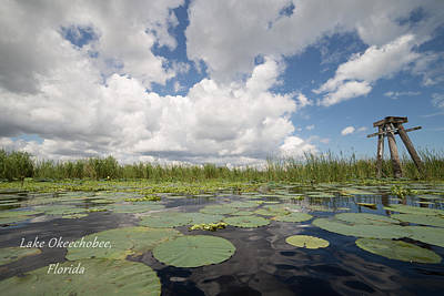 Photograph - From A Frog's Point Of View - Lake Okeechobee by Christopher L Thomley