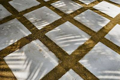Photograph - Shadow Of Palm by JAMART Photography