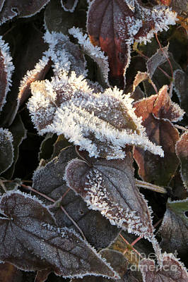 Photograph - Frost-lined by Frank Townsley