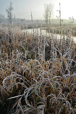 Photograph - Frosted Grasses Along Nippersink Creek In Glacial Park by Ray Mathis