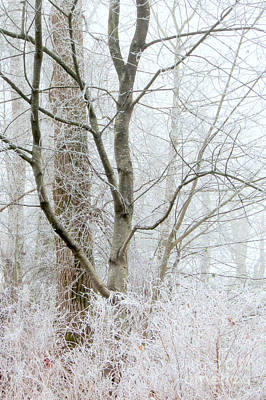 Photograph - Silvery Forest by Frank Townsley