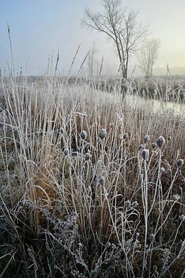 Photograph - Frosty Morning On Nippersink Creek by Ray Mathis