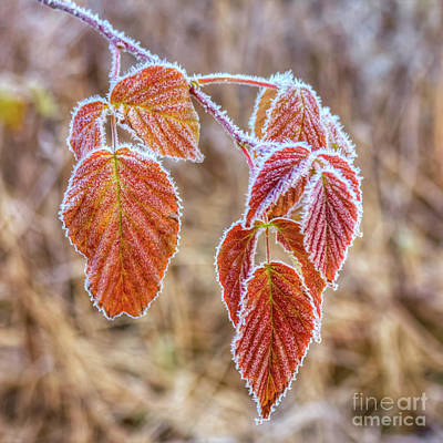 Frost Photograph - Frosty Morning by Veikko Suikkanen