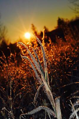 Photograph - Frosty Sunrise by Dacia Doroff