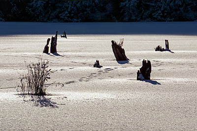 Photograph - Frozen Lake by Inge Riis McDonald