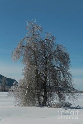 Photograph - Frozen by Rod Wiens