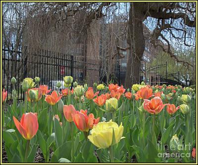 Photograph - Full Bloom by Deborah Klubertanz