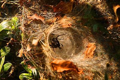 Photograph - Funnel-web Spider by Kathryn Meyer