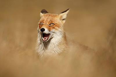 Funny Fox Art Print by Roeselien Raimond
