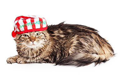 Funny Grumpy Christmas Cat Art Print by Susan Schmitz