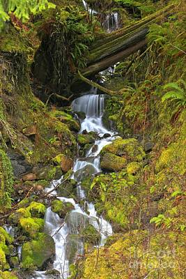 Angeles Forest Photograph - Streaming Through Rainforest Rubble by Adam Jewell
